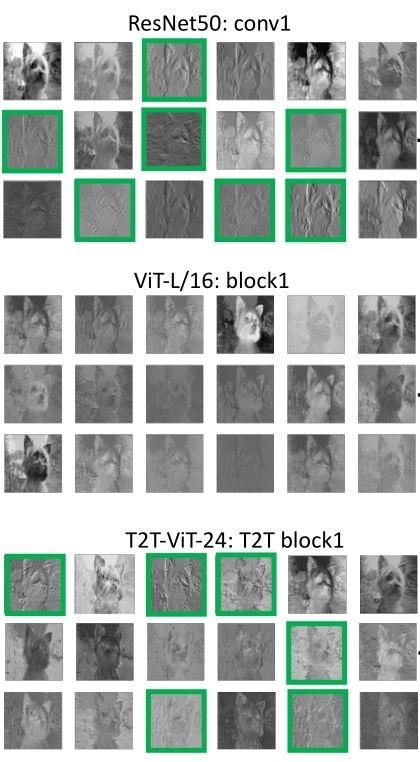 图1:ViT,ResNet,T2T-ViT模型的首层特征可视化