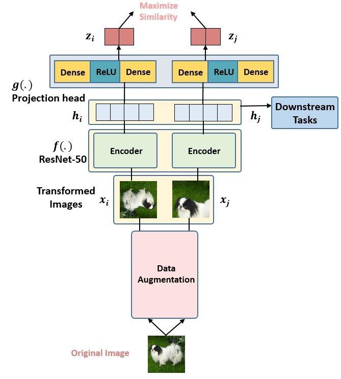 图3:在预训练 SimCLR 时试图教SimCLR区分相似和不相似的事物