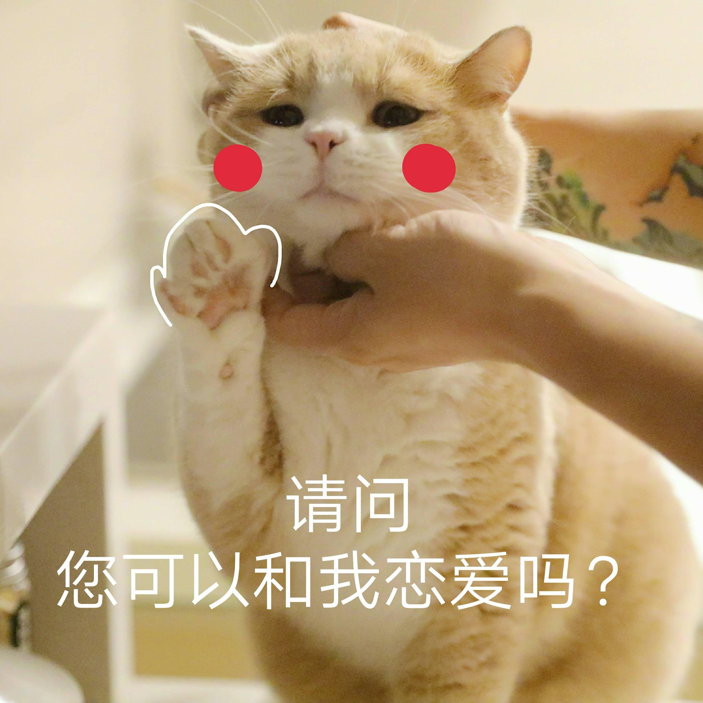 请问您可以和我谈恋爱吗(猫咪)