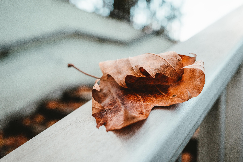 人生如茶,沉时坦然,浮时淡然,拿得起也需要放得下-觅爱图