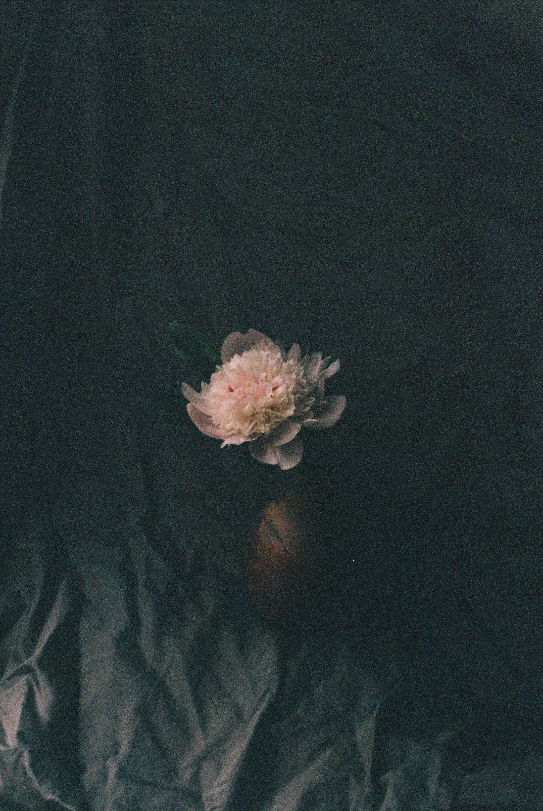 我爱你,所以卑微到尘埃里,然后开出花来-觅爱图