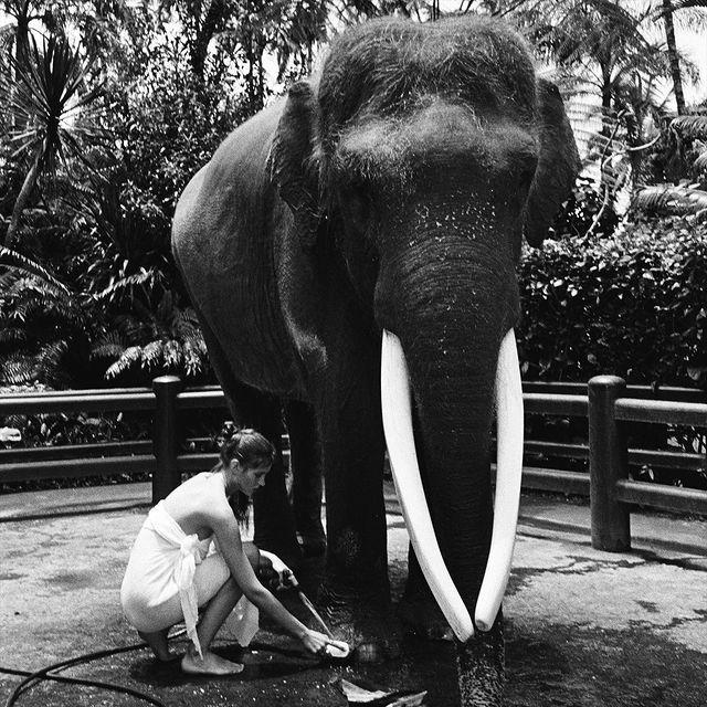 美女全裸骑大象惹议?名模《Alesya Kafelnikova》表示爱自然是天性. 养眼图片 第7张