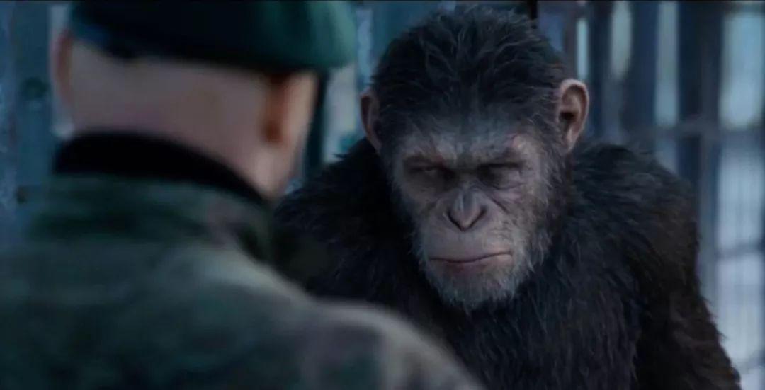 你期待看到《猩球崛起》系列影片拍摄续集吗?好消息来了 liuliushe.net六六社 第1张