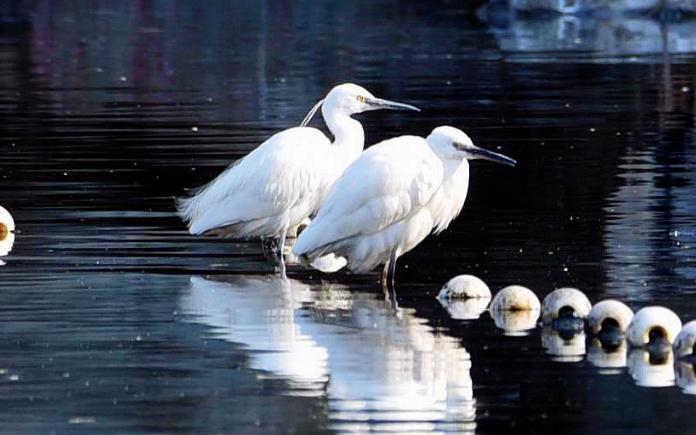 小小说:鸟界选美