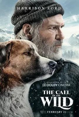 极地守护犬电影在线观看海报剧照