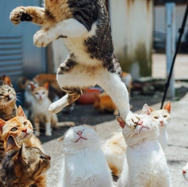 www.taoshu6.com_如此巧合到难以置信的一瞬间,竟然还被拍成了23张照片