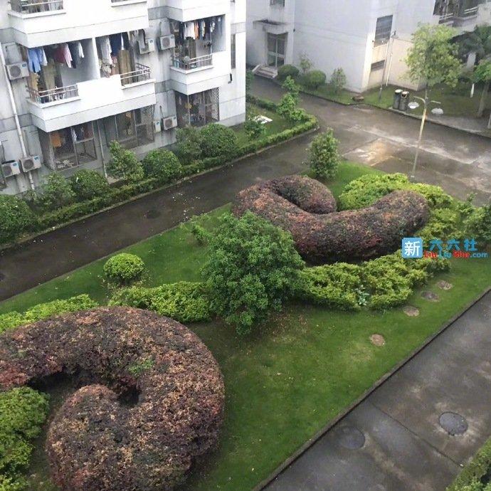 这个学校的绿化很有新意啊!早晨起来,面向大便