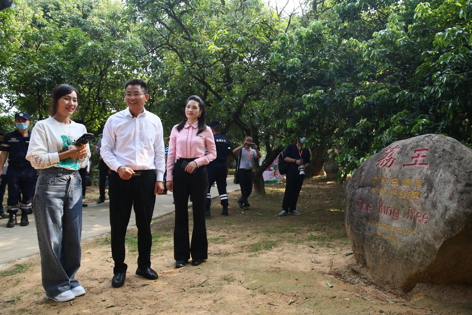 高州市市长朱春保介绍八百年荔王古树