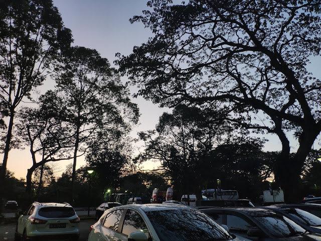 Singapore Zoo——Rainforest Lumina