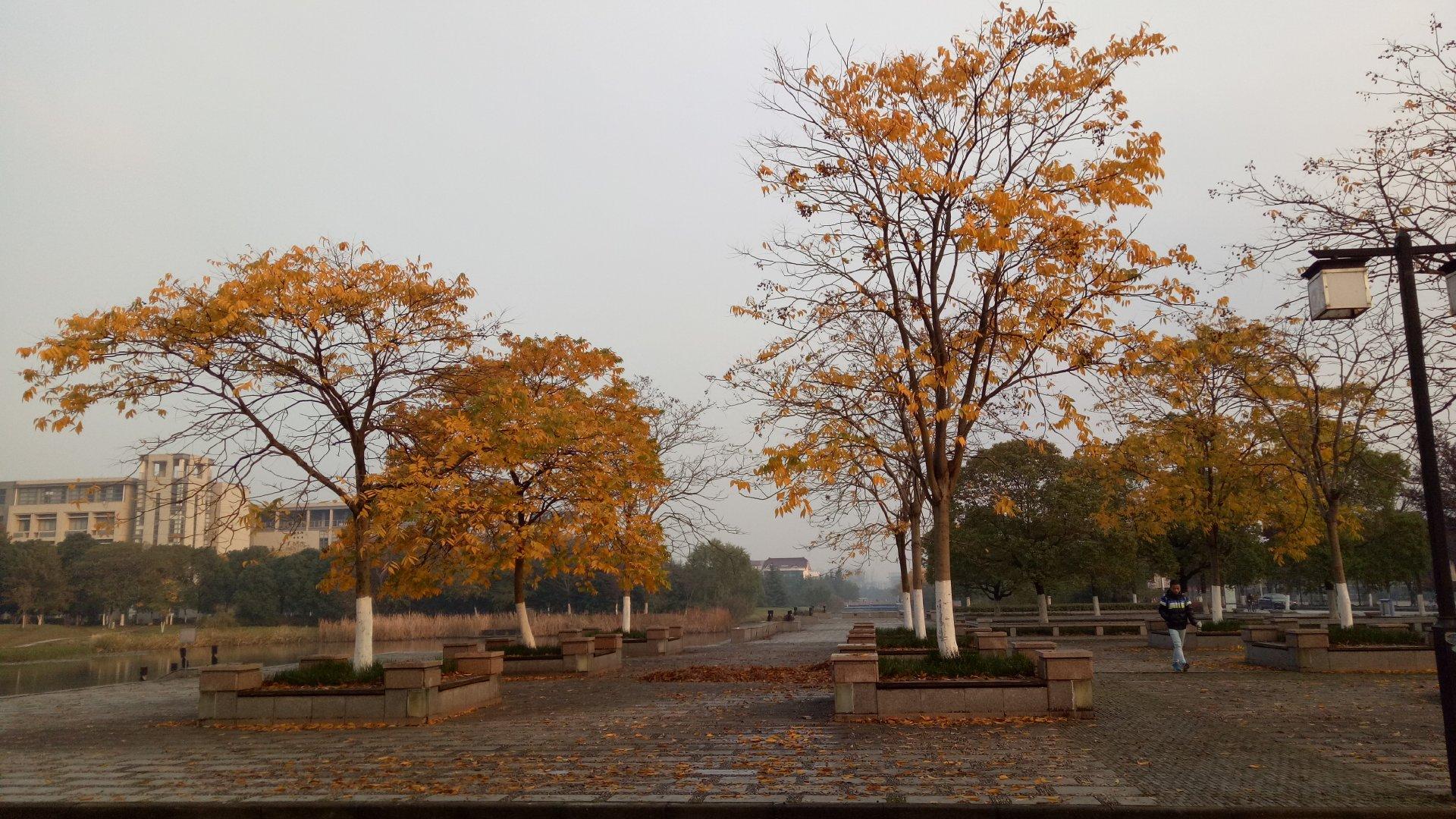 Segment Tree Problem Set