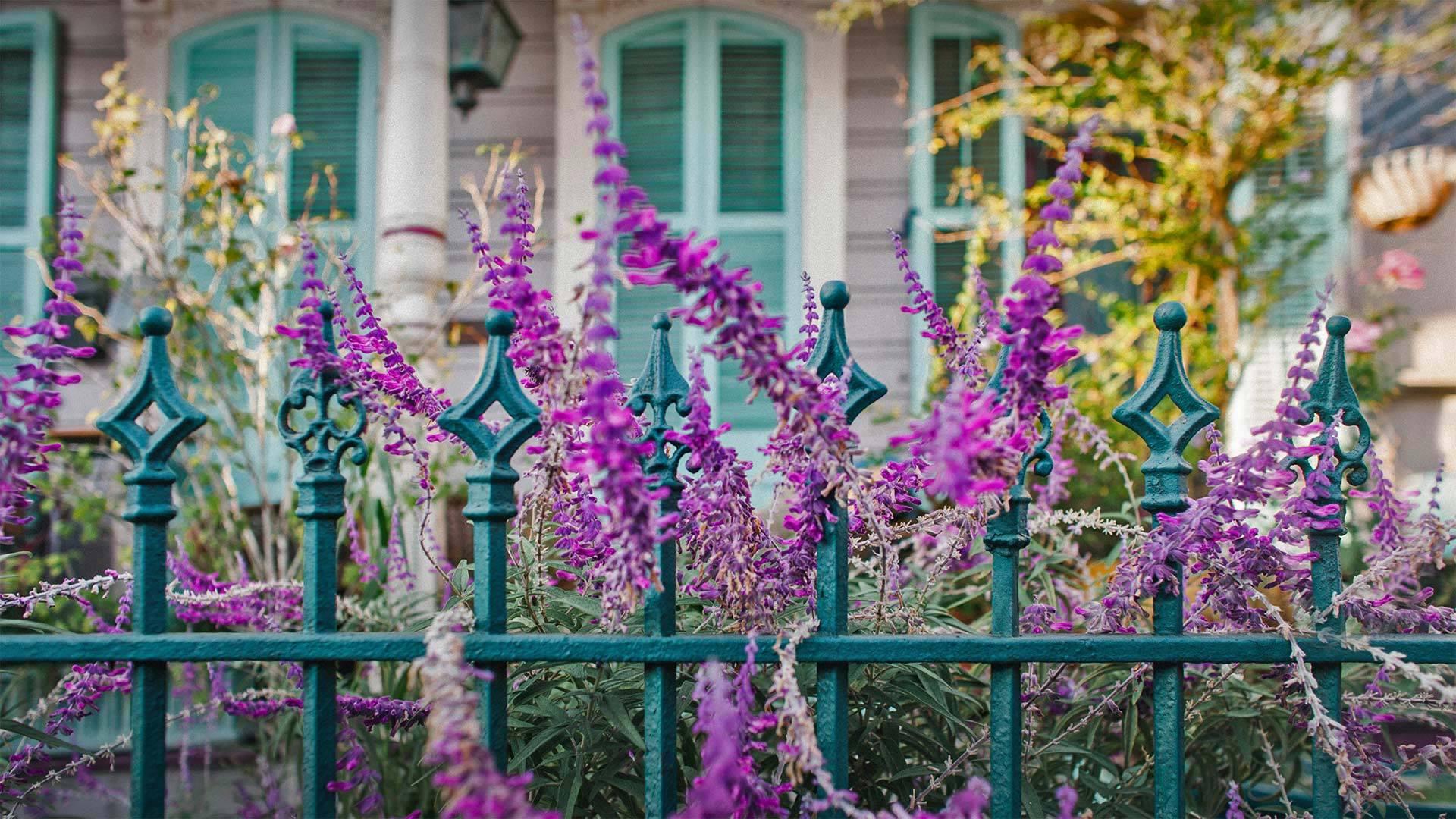 屋前的鲜花和铁艺围栏铁艺围栏