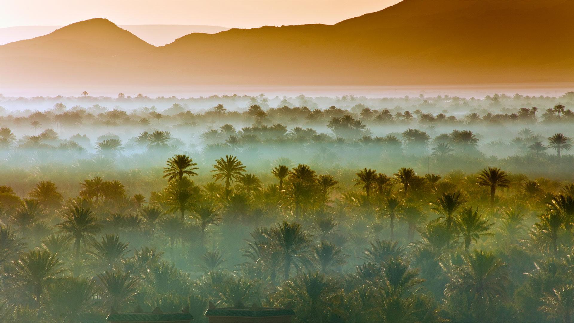 摩洛哥扎戈拉附近的椰枣树林