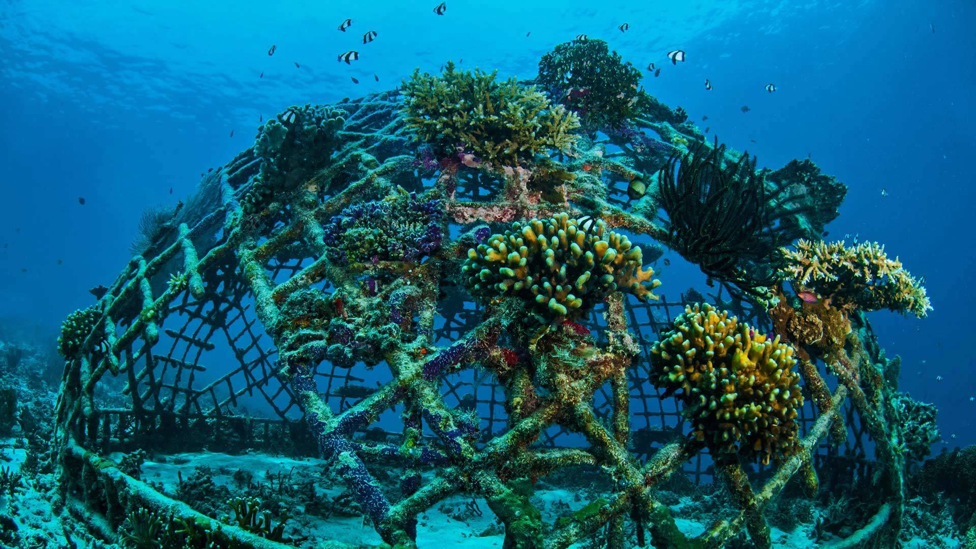 吉利群岛上生长着珊瑚的人工珊瑚礁