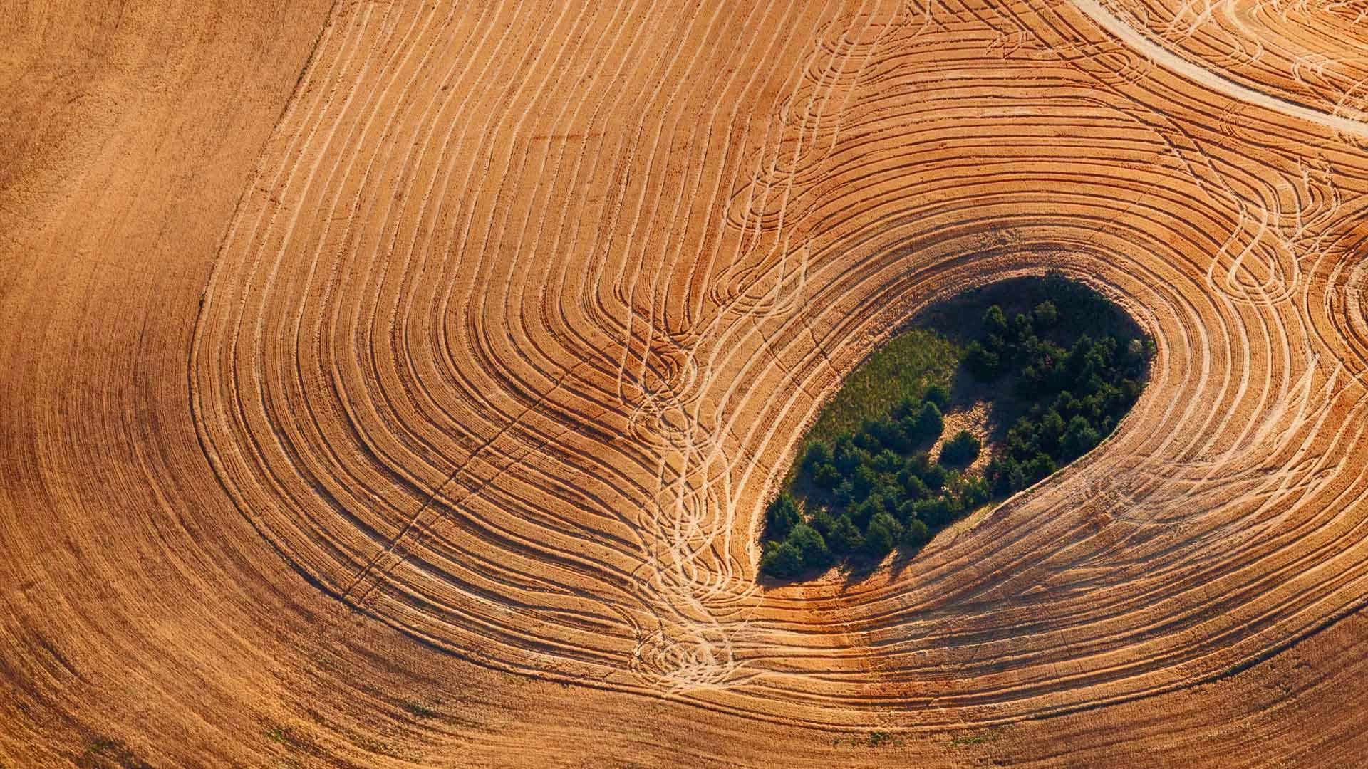 华盛顿州帕卢斯地区的农田