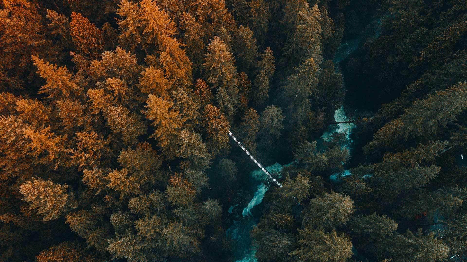鸟瞰生长在森林中的树木
