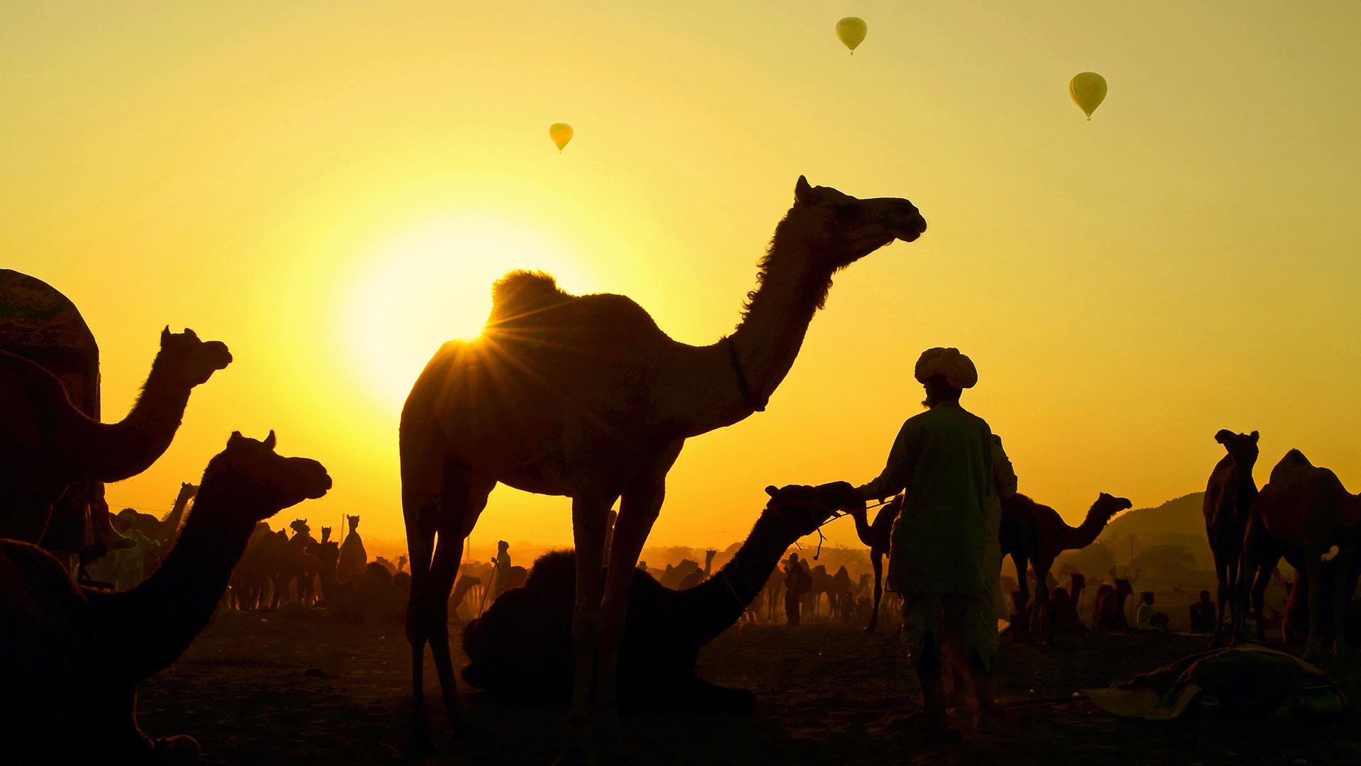 普什卡骆驼节上的骆驼与牧民