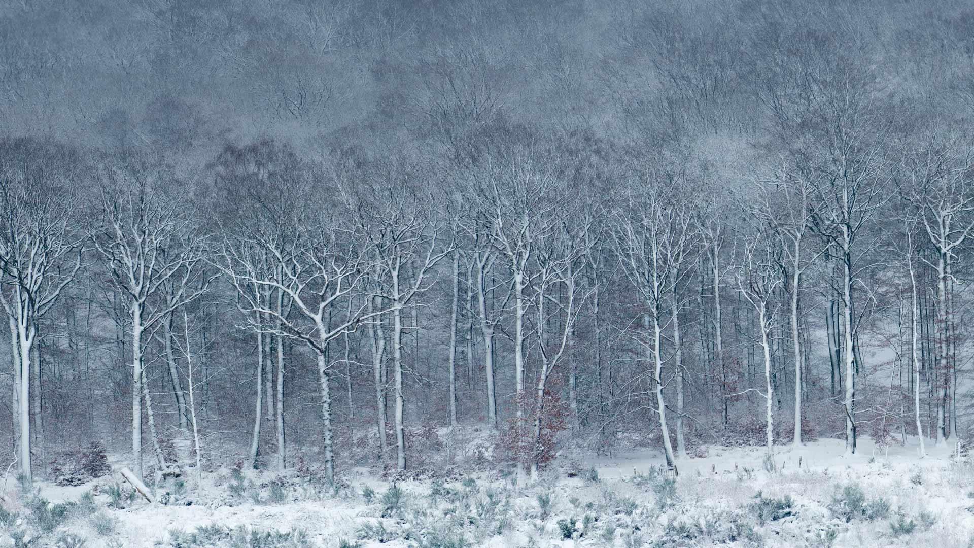 银装素裹的Luzulo-Fagetum山毛榉林Luzulo-Fagetum山毛榉林