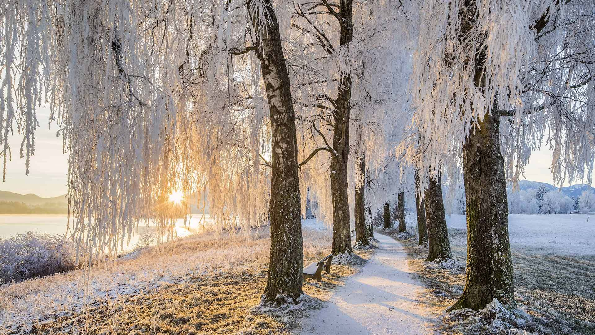 施塔弗尔湖畔乌芬附近的桦树大道桦树大道