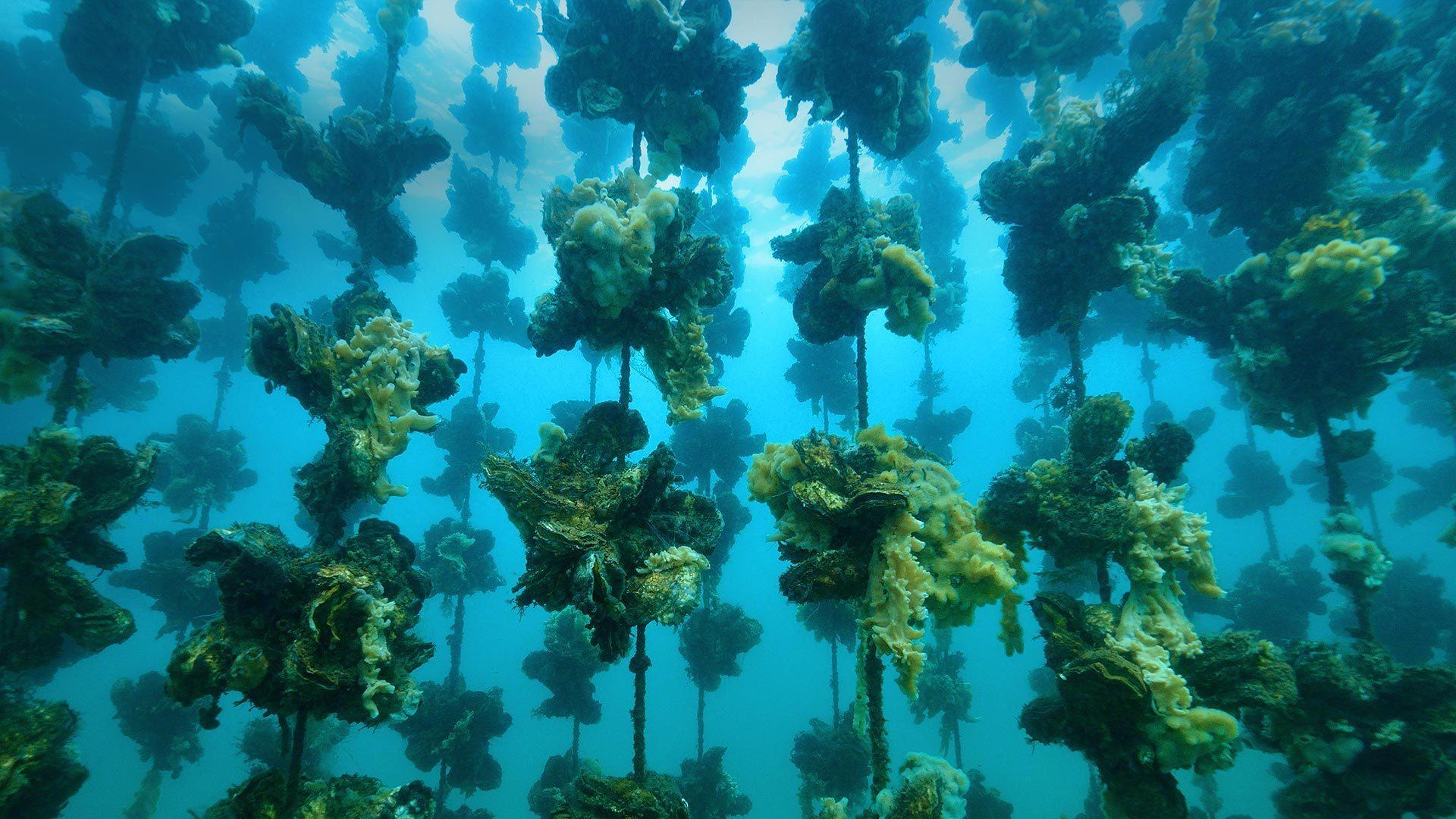 Notojima岛附近的牡蛎养殖场Notojima岛