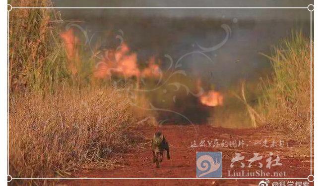 为什么任由大火烧了亚马逊雨林23天,却没人救火和报道? liuliushe.net六六社 第5张