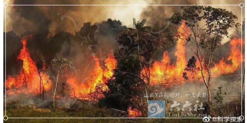 为什么任由大火烧了亚马逊雨林23天,却没人救火和报道? liuliushe.net六六社 第9张