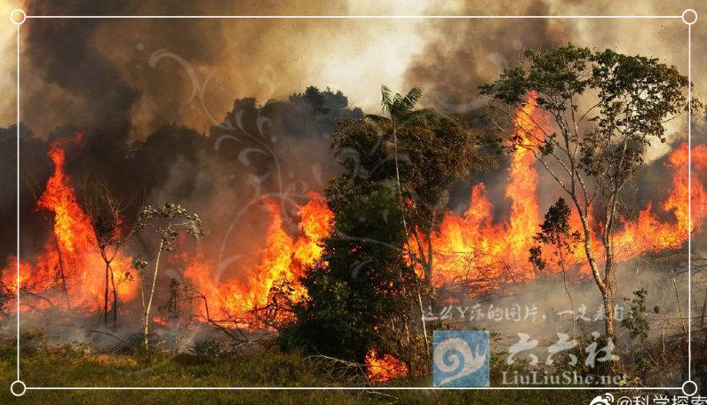 为什么任由大火烧了亚马逊雨林23天,却没人救火和报道? liuliushe.net六六社 第12张