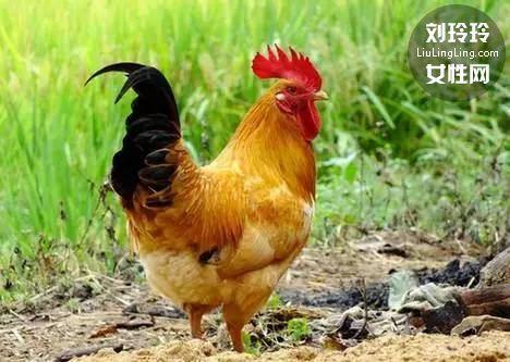 怎么煲鸡汤营养又好喝 简单教你煲出美味鸡汤!2