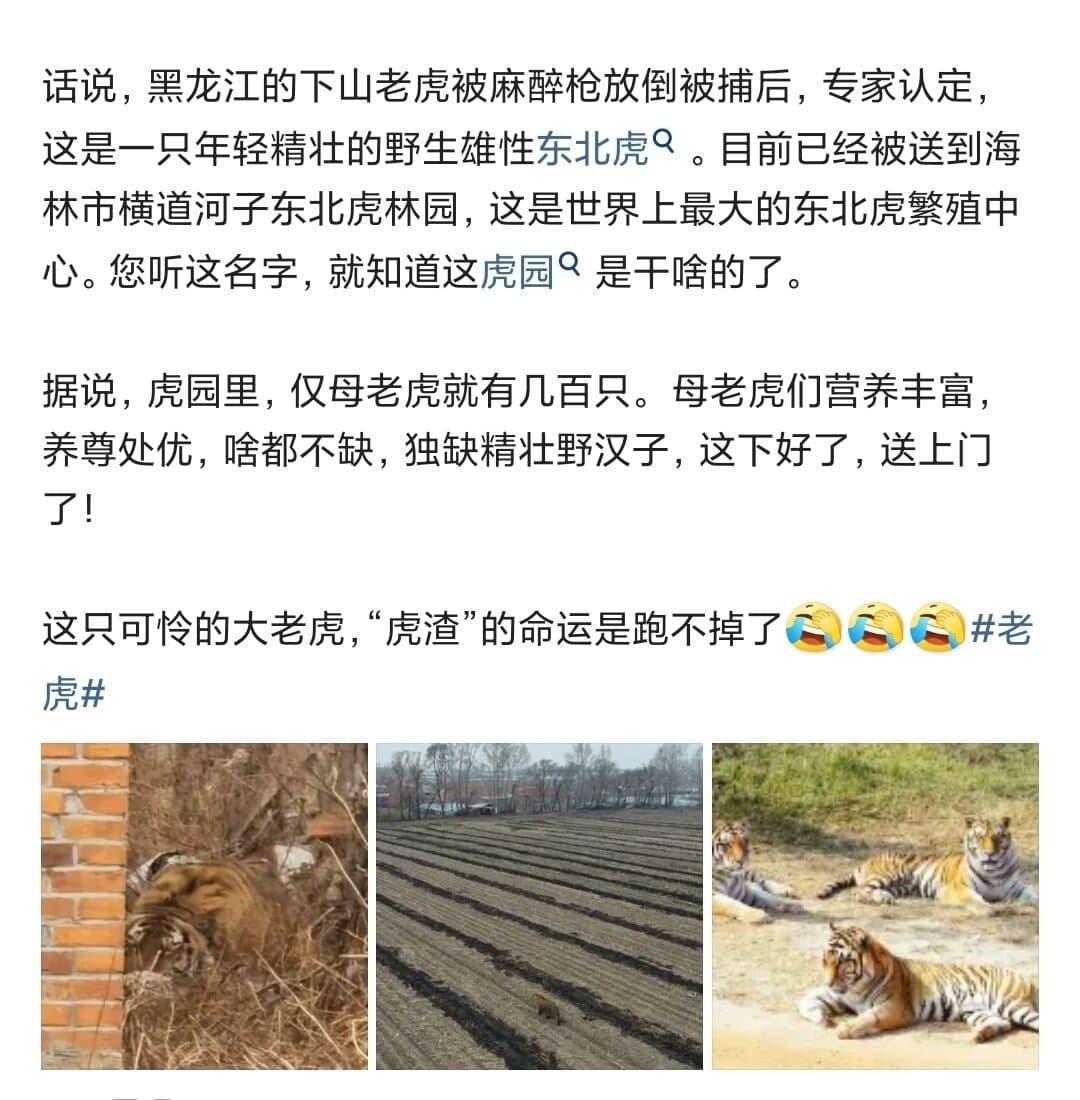 完达山一号的性福生活 领导的龙王印记 热门段子 热图12