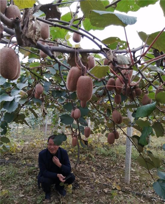 塔罗游记:从春华到秋实,从播种到收获