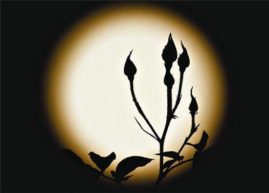 专业占星学:黑月来袭不要怕!恐惧之王黑月,其实让人更完美!