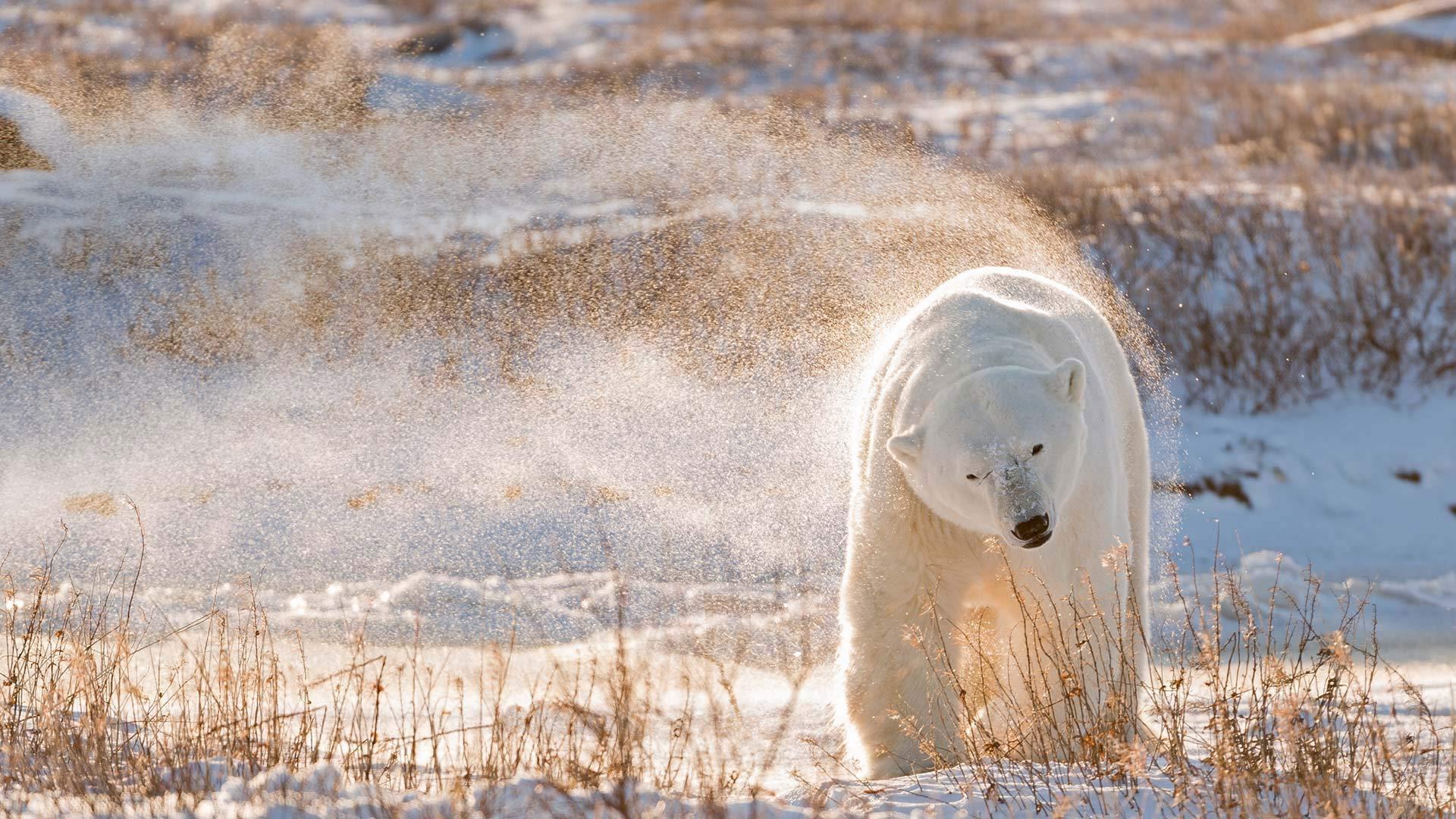 注意!熊出没!!!