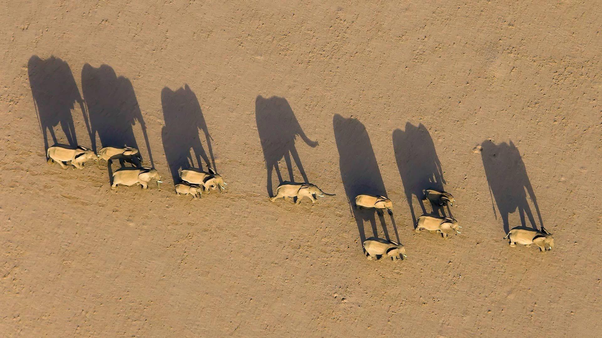 纳米比亚达马拉兰区的大象群