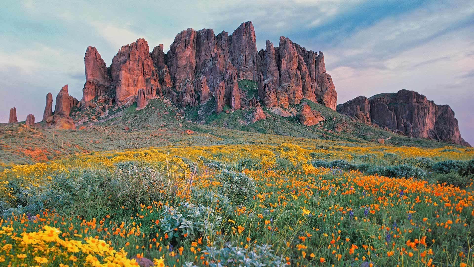 盛开的沙漠