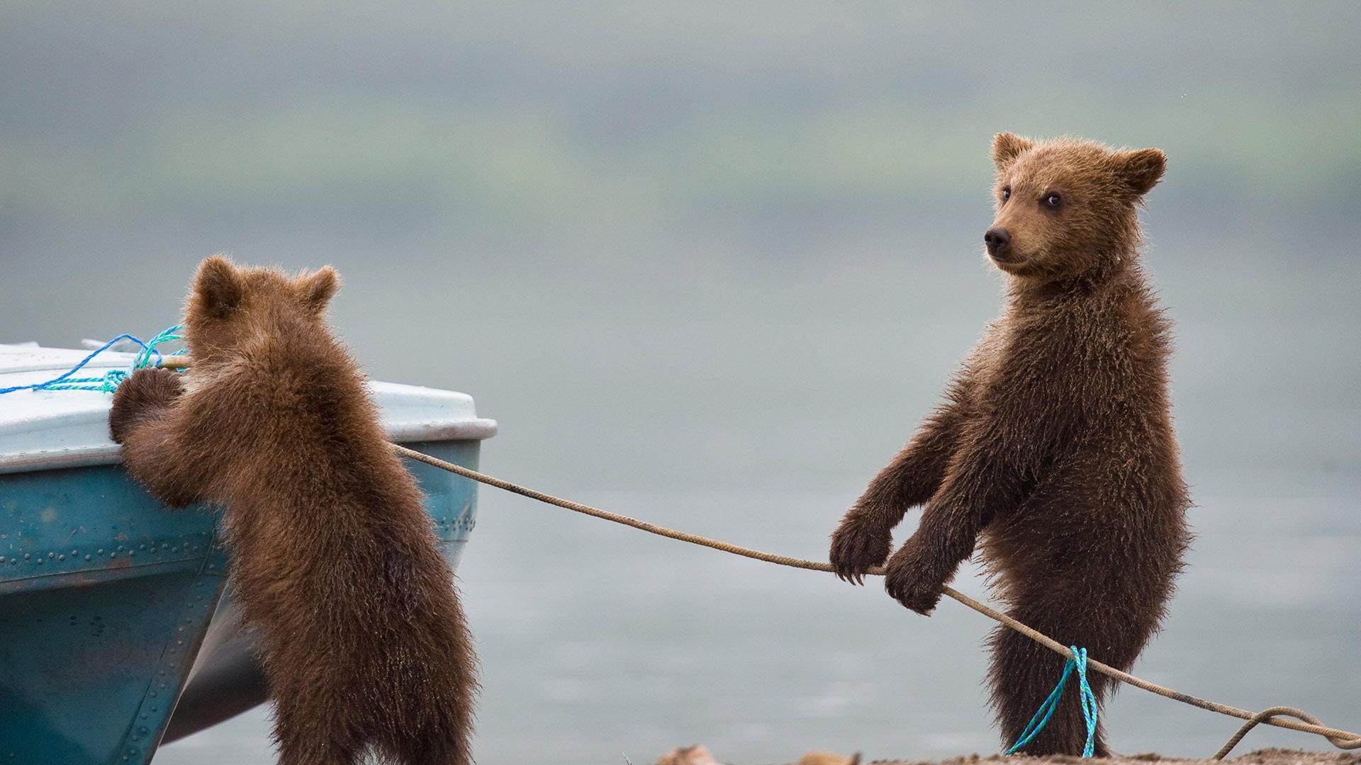 湖边玩耍的小熊