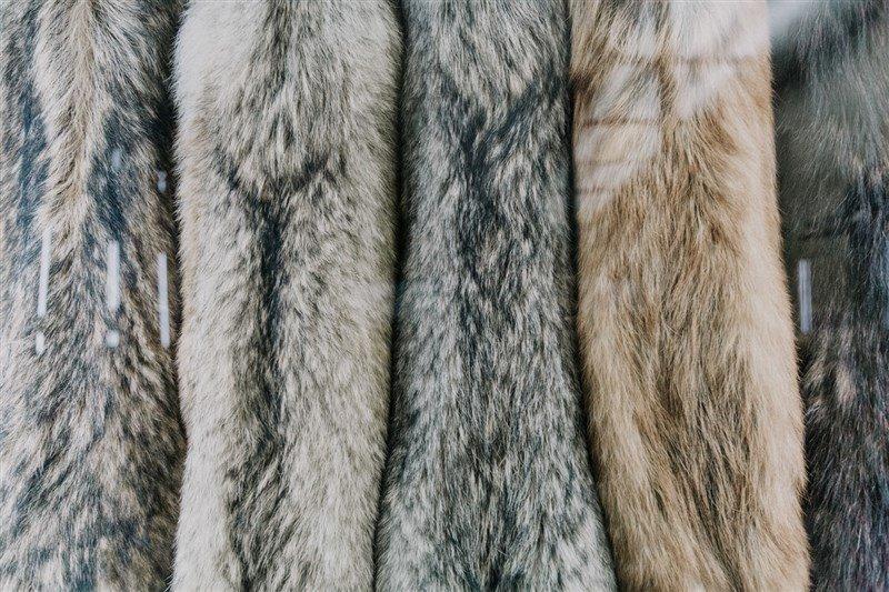 爱动物!时装名牌Prada 今年起不用动物皮毛