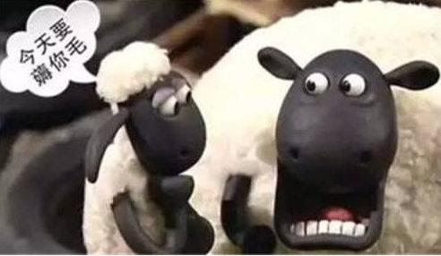 薅羊毛是什么意思? 薅猫毛又是什么含义? 薅羊毛 第1张