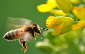 蜜蜂蛰消肿的最快方法?点击下方了解详情 网赚项目 第1张