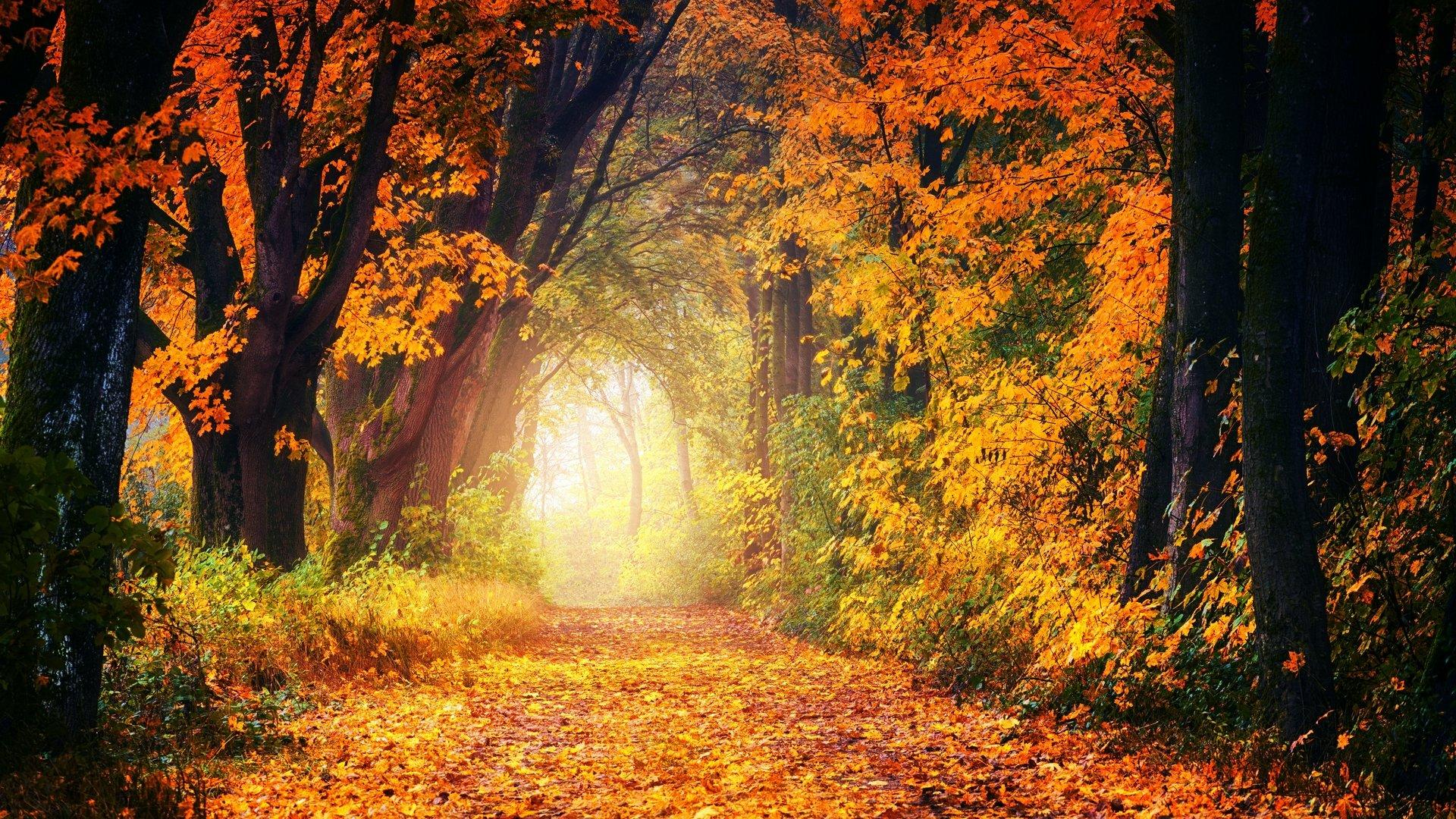 落叶图片_最新图片秋天高清落叶图片10张