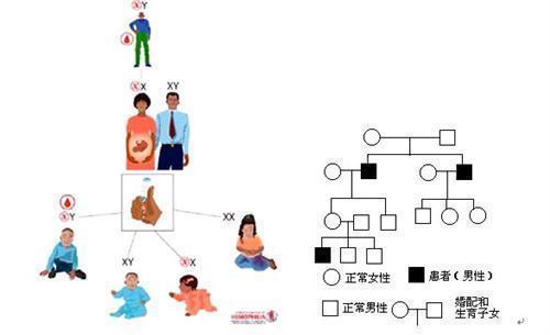 90-类的派生-基因遗传.jpg