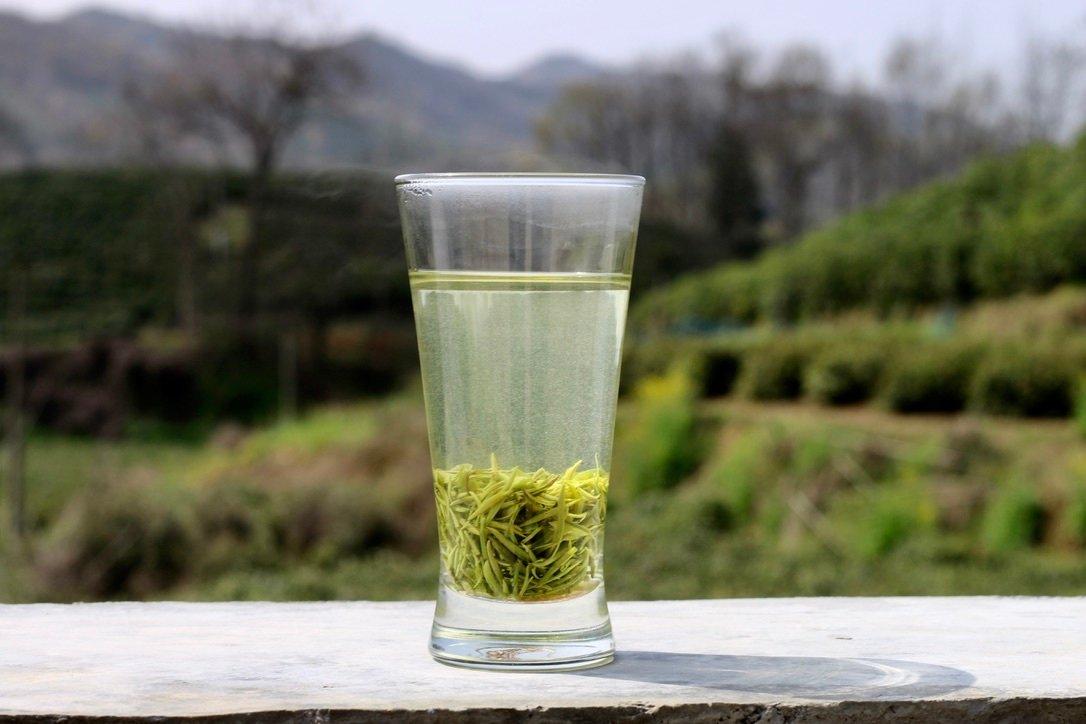 大白茶品种