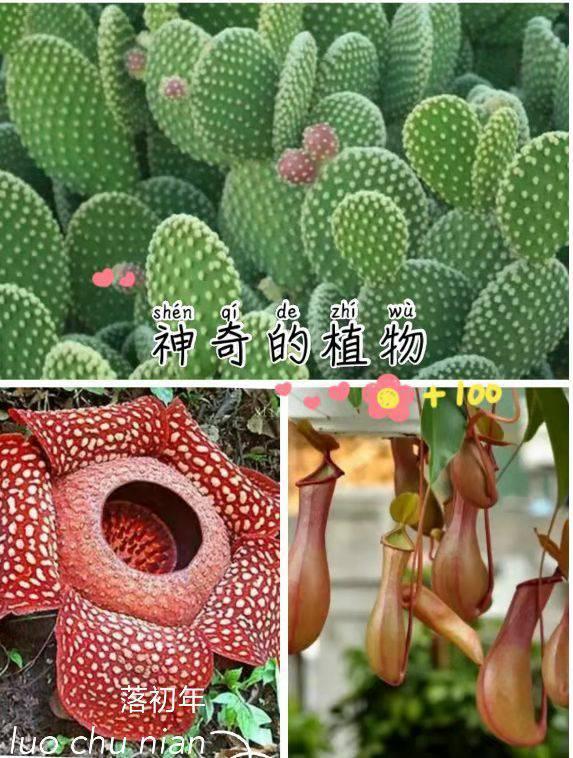神奇的植物