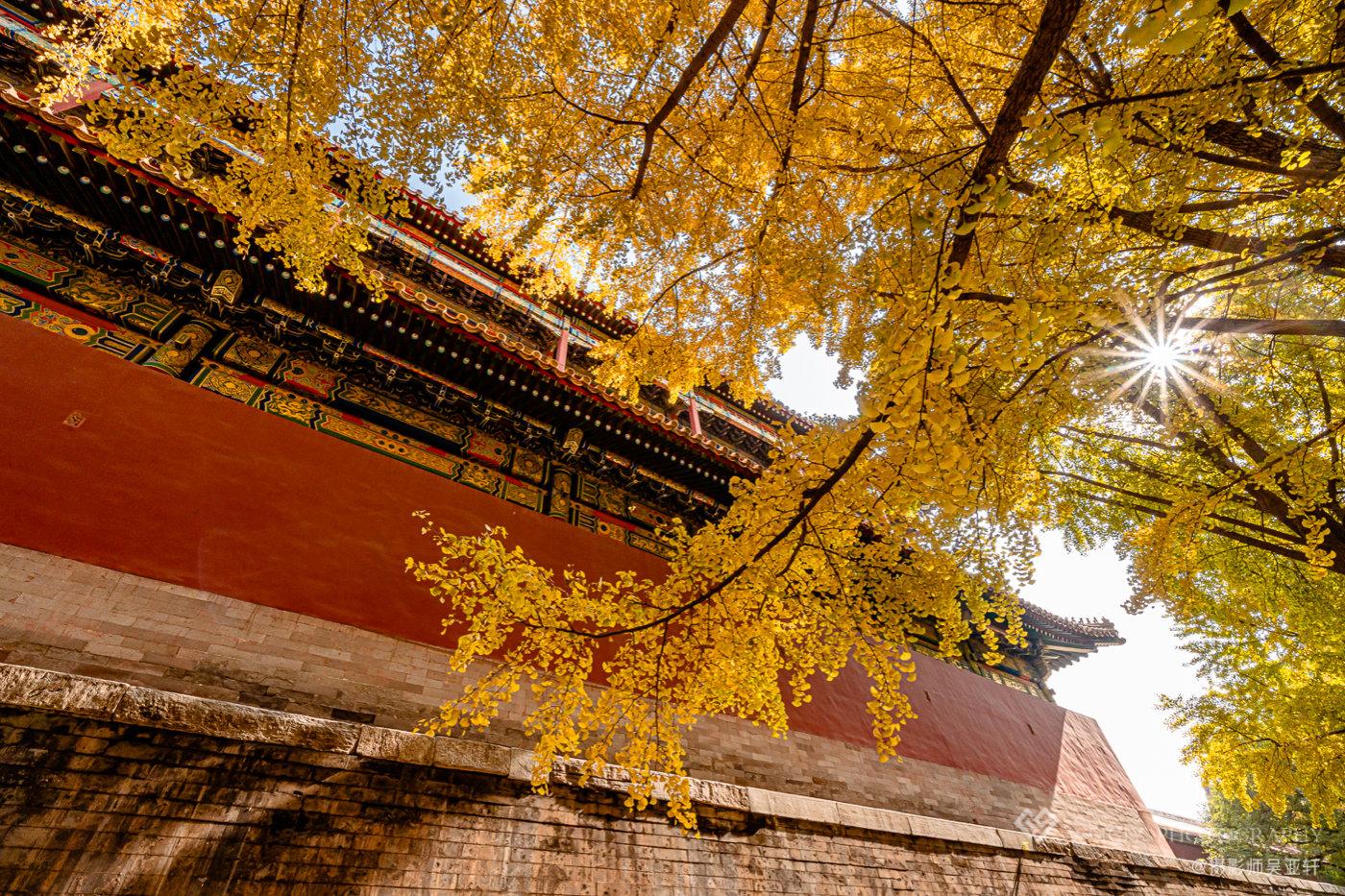 《秋色紫禁城》——10.30 北京故宫