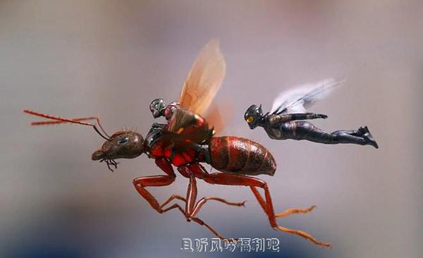 蚁人2:黄蜂女现身(兔豆网)