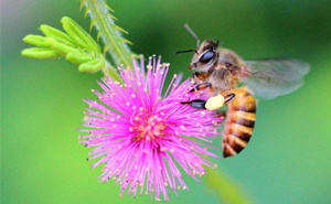 花儿蜜蜂绿叶