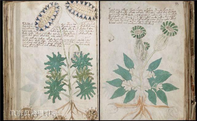 伏尼契手稿(voynich手稿)书中内容至今无人识别