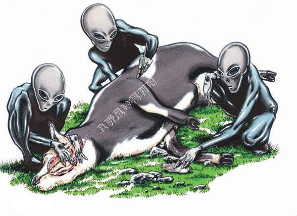 屠牛事件真相未解之谜 或许真是外星人所为