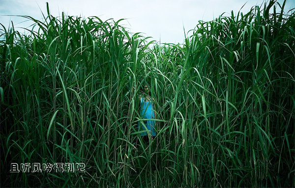 2019恐怖惊悚电影《高草丛中》迅雷下载-且听风吟电影