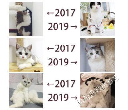 2017和2019的对比
