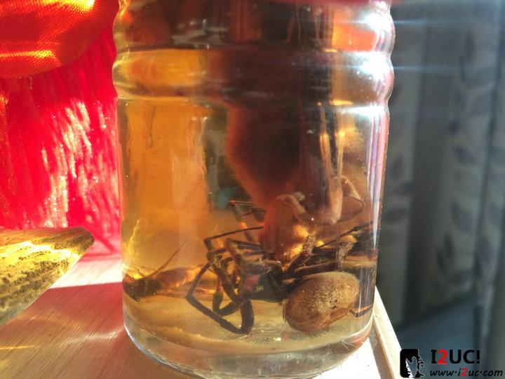蝙蝠、蜘蛛酒!