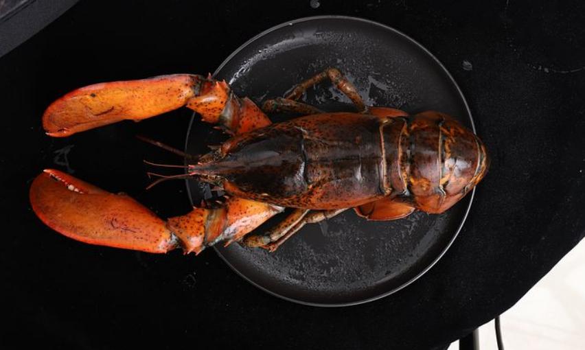探秘美国海鲜业,中国吃货带火的波士顿龙虾要凉了? 涨姿势 第1张
